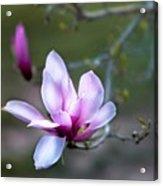 Spring's Bloom Acrylic Print