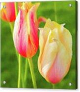 Spring's Garden Acrylic Print