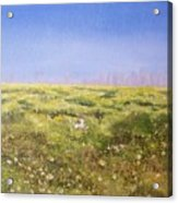 Springtime At Fiesta Island Acrylic Print