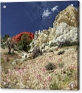 Springtime At Red Rock Canyon Acrylic Print