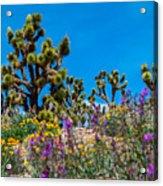Springtime At The Canyon Acrylic Print