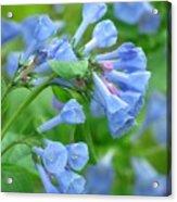 Springtime Bluebells  Acrylic Print