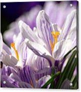 Springtime Color Acrylic Print