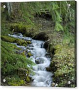 Springtime Creek Acrylic Print