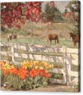 Springtime Horses Acrylic Print