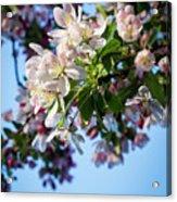 Springtime In Bloom Acrylic Print
