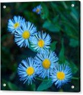 Springtime In Grand Teton Acrylic Print