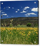 Springtime In Hat Creek Acrylic Print