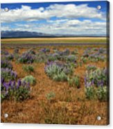 Springtime In Honey Lake Valley Acrylic Print