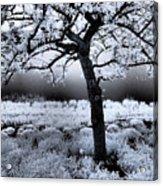 Springtime In Infrared Acrylic Print