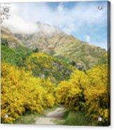 Springtime In New Zealand Acrylic Print