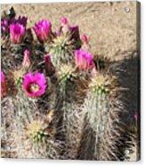 Springtime In The Desert Acrylic Print