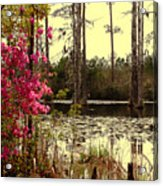 Springtime In The Swamp Acrylic Print