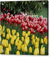 Springtime In Washington Acrylic Print