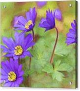 Springtime Riot Acrylic Print