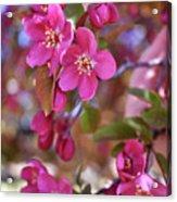 Springtime Romance Acrylic Print