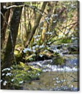 Springtime Stream In The Smokies Acrylic Print