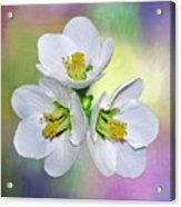 Springtime Triplets By Kaye Menner Acrylic Print
