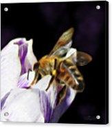 Springtime Visitor Acrylic Print
