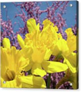 Springtime Yellow Daffodils Art Print Pink Blossoms Blue Sky Baslee Troutman Acrylic Print