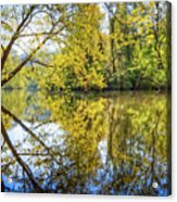 Springtime Yellows And Blues Acrylic Print
