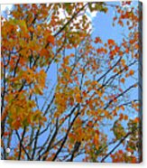 Sprinkles Of Autumn Acrylic Print