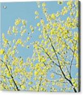 Sprint Blossom  Acrylic Print