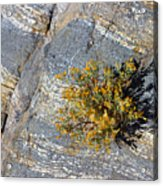 Sprouting Rock Acrylic Print
