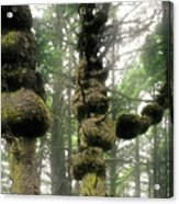 Spruce Burl Olympic National Park Beach 1 Wa Acrylic Print by Christine Till