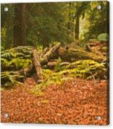 Spruce Logs Leith Hill Surrey 2014 Acrylic Print