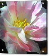 Square Tulip Acrylic Print