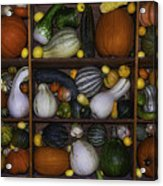 Squash And Gourds In Compartments Acrylic Print