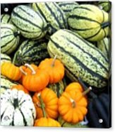 Squash Harvest Acrylic Print by Will Borden