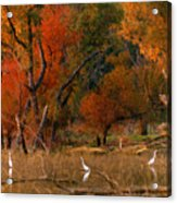Squaw Creek Egrets Acrylic Print