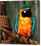 Squawk Acrylic Print