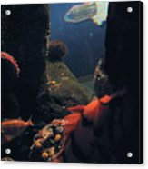 Squid And Fish Acrylic Print