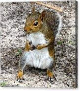 Squirrel 2 Acrylic Print