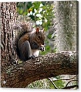 Squirrel 7 Acrylic Print