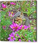 Squirrel Among Coreopsis In Huntington Gardens In San Marino-california   Acrylic Print