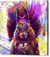 Squirrel Animals Possierlich Nager  Acrylic Print