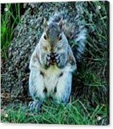 Squirrel Friend Acrylic Print