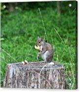 Squirrel Having Lunch Acrylic Print