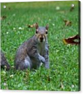 Squirrel Iv Acrylic Print