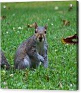 Squirrel Iv Acrylic Print