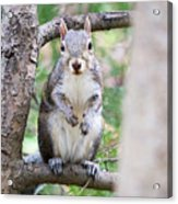 Squirrel Looking At Photographer And Waiting To Be Fed Acrylic Print