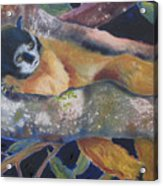Squirrel Monkey Revised Acrylic Print