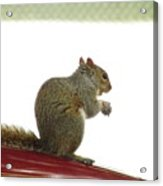Squirrel On Car Acrylic Print