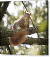 Squirrel On The Spot Acrylic Print