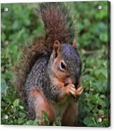Squirrel Portrait # 3 Acrylic Print