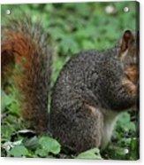 Squirrel Portrait # 6 Acrylic Print